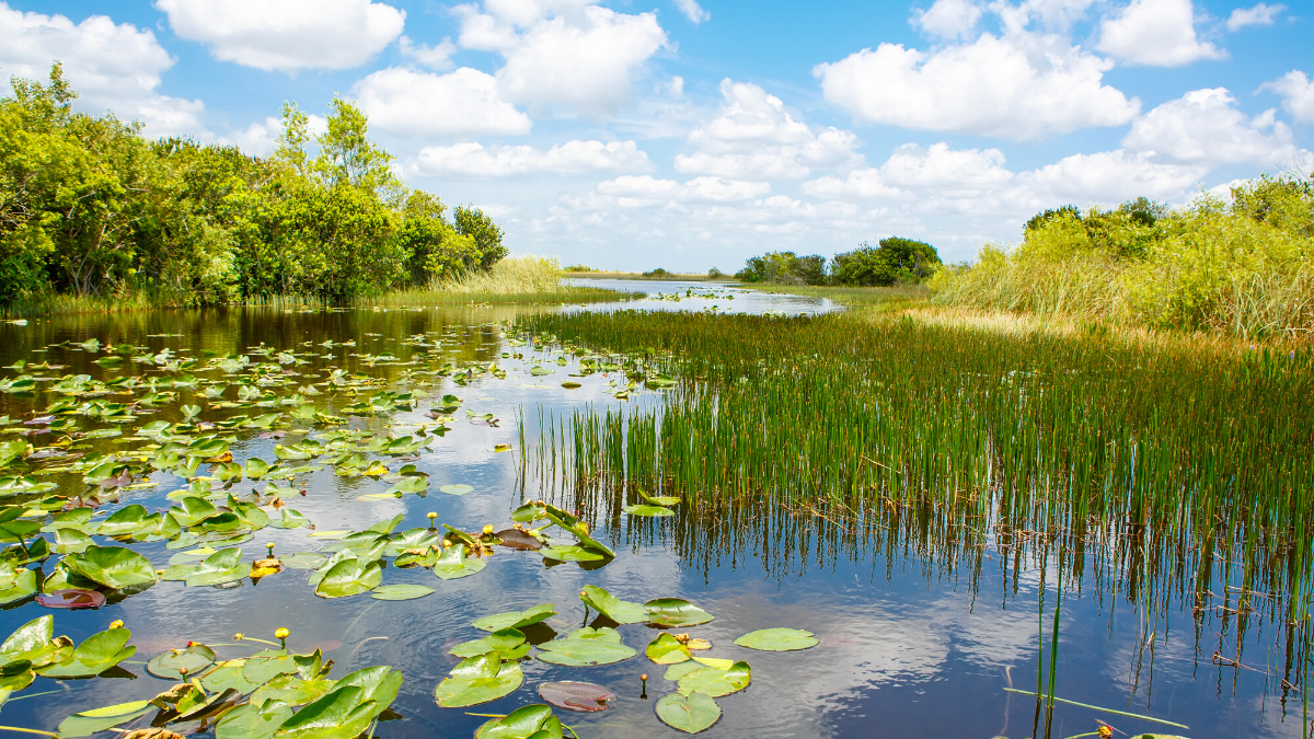 Everglades National Park - Handicapped Friendly Vacation